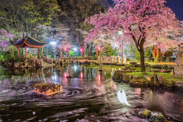 日中友好庭園の花筏1