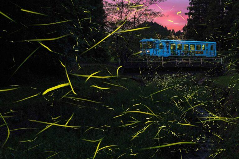 樽見鉄道とゲンジボタル