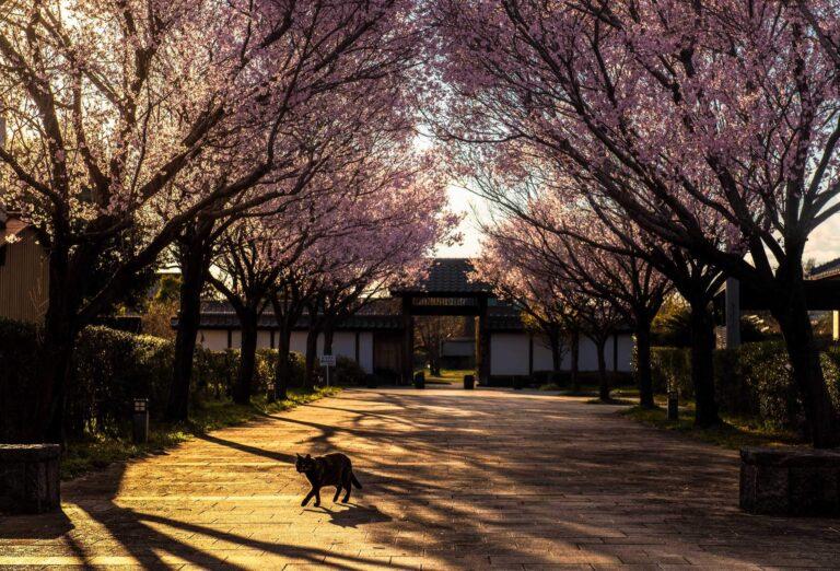 春の旗本徳山陣屋公園