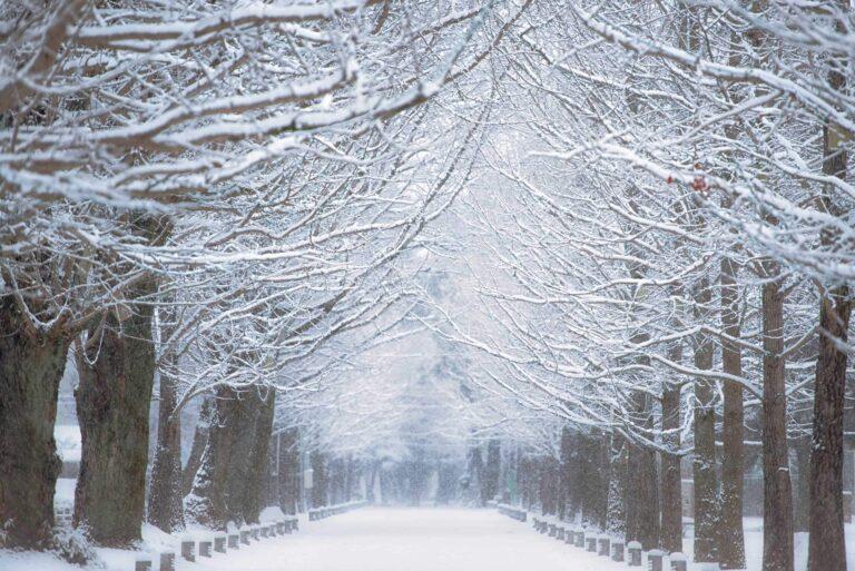 冬の学びの森プロムナード