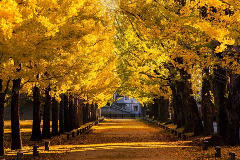 秋の学びの森プロムナード