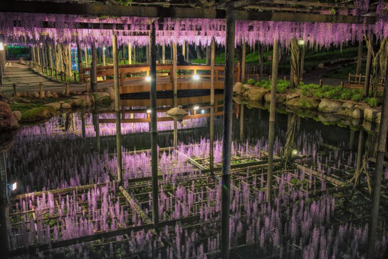 天王川公園の藤(愛知県)