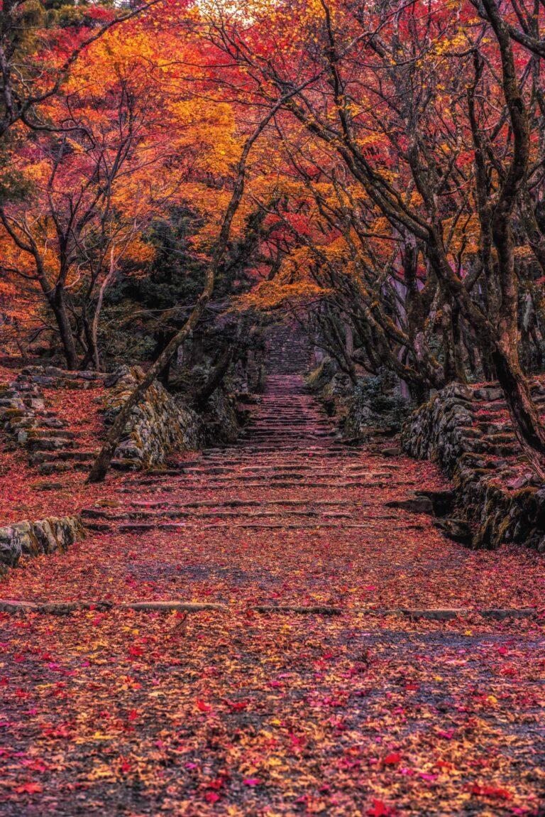 鶏足寺の紅葉1(滋賀県)