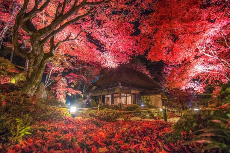教林坊の紅葉(滋賀県)