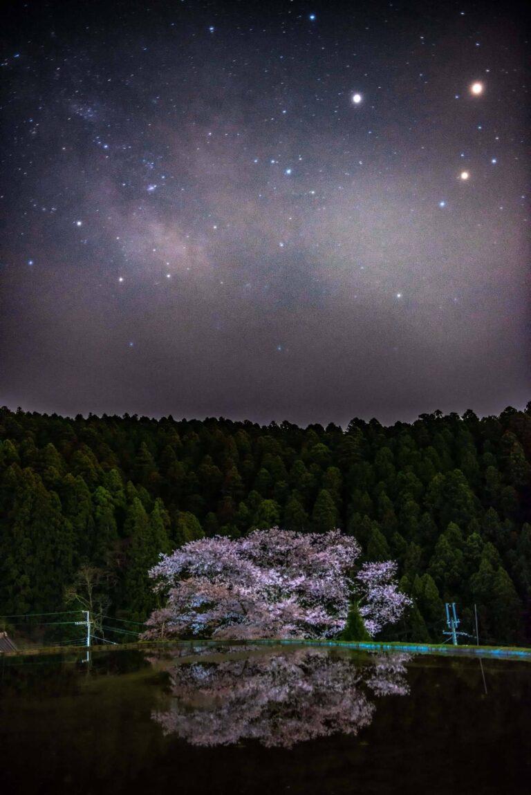 諸木野の桜(奈良県)