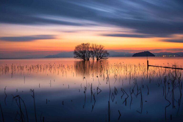 湖北の水中木(滋賀県)