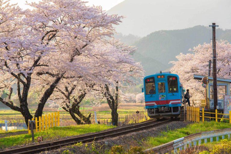 かつての木知原駅の春