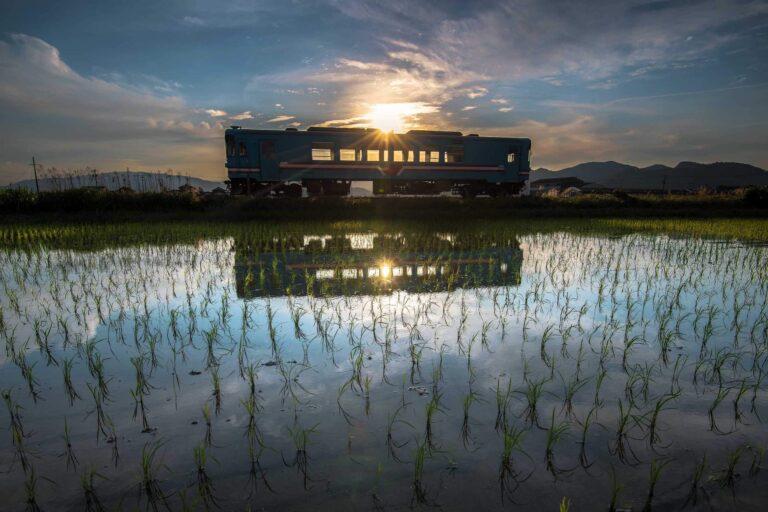 水田と樽見鉄道