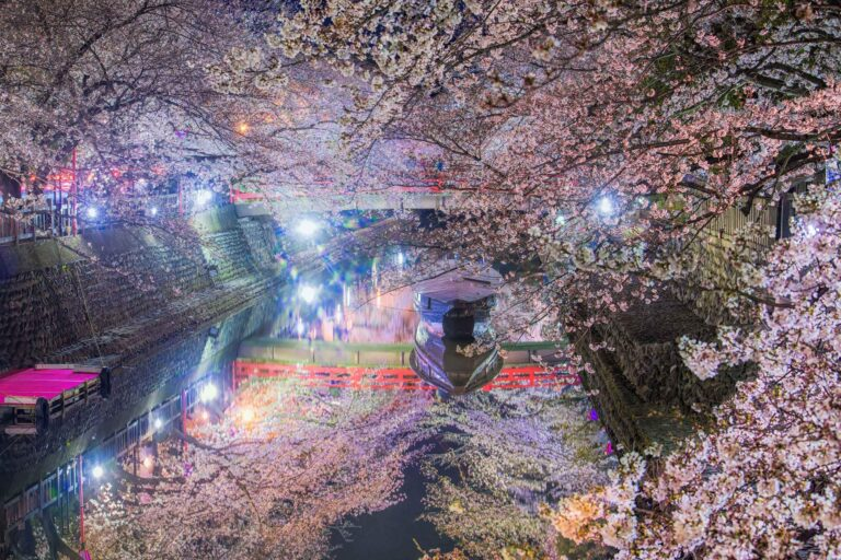 水門川の桜