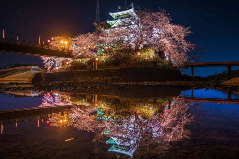 墨俣「一夜城」の桜