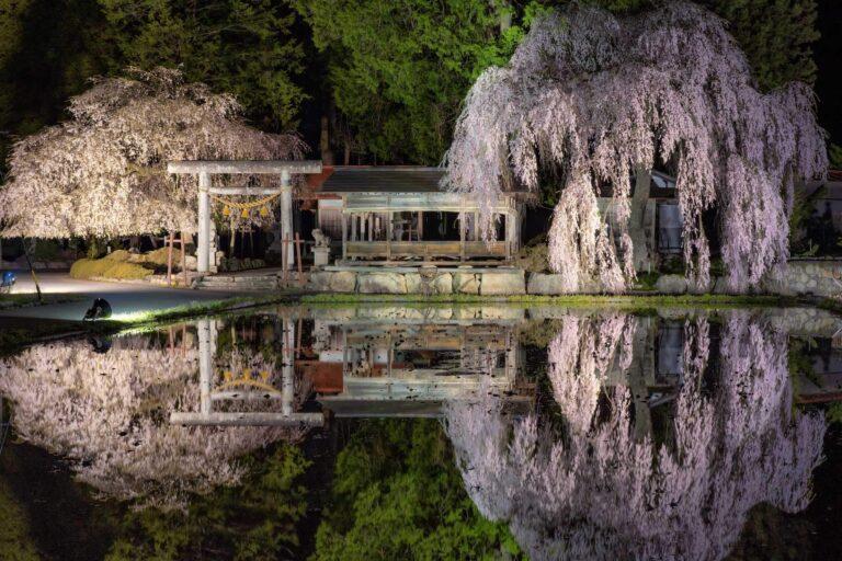青屋神明神社のしだれ桜