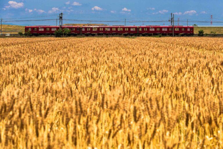養老鉄道と麦畑